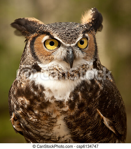 Great Horned Owl - csp6134747