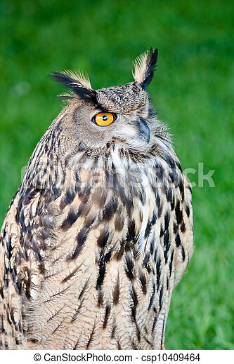 Great Horned Owl - csp10409464