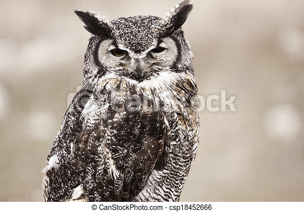 Great Horned Owl - csp18452666