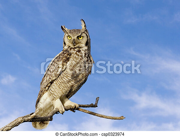 Great horned owl - csp0323974