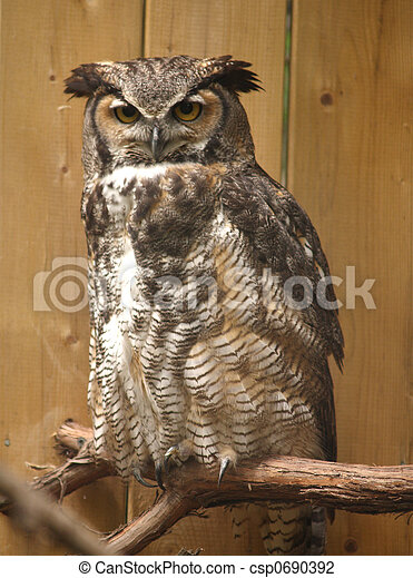 great horned owl - csp0690392
