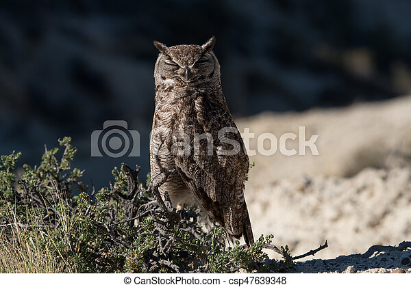 Great Horned Owl - csp47639348