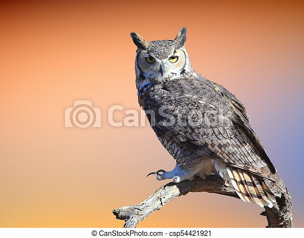 Great Horned Owl - csp54421921
