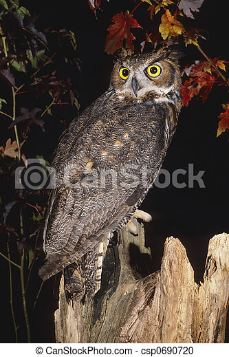 Great Horned Owl - csp0690720