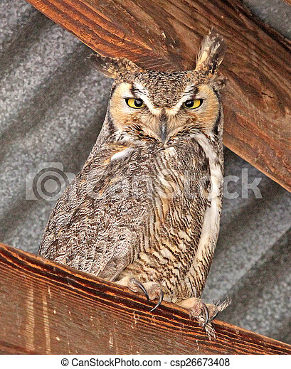 Great Horned Owl - csp26673408
