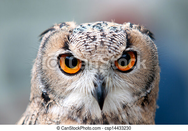 Great Horned Owl - csp14433230