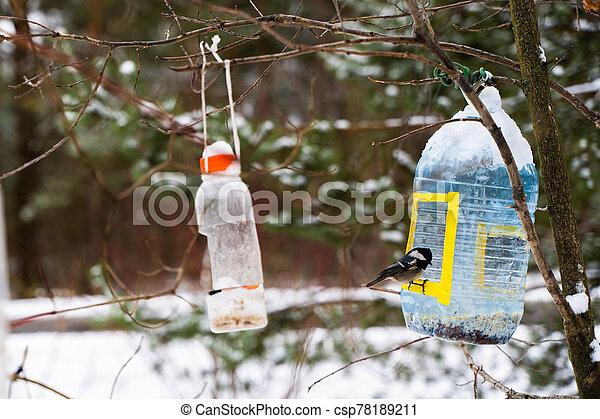 Great tit bird sitting on the feeder - csp78189211