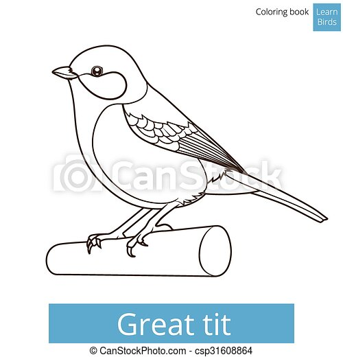 Great Tit Learn Birds Coloring Book Vector