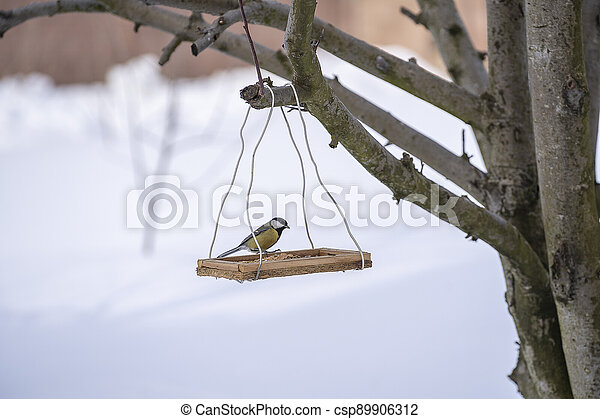Great tit Parus Major on feeder at winter, close up - csp89906312