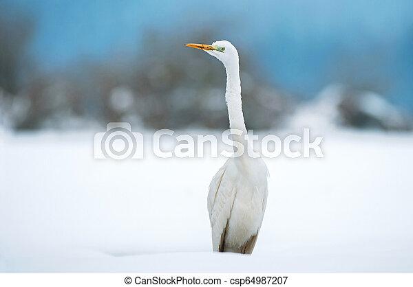 Great white egret in winter - csp64987207