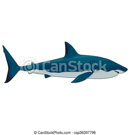 great white shark - csp36397796