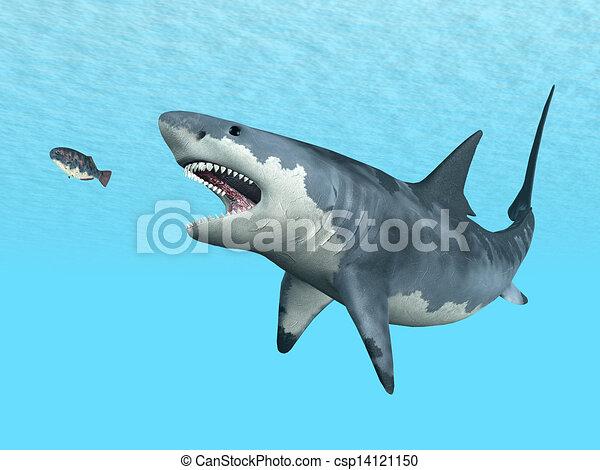 Great White Shark - csp14121150