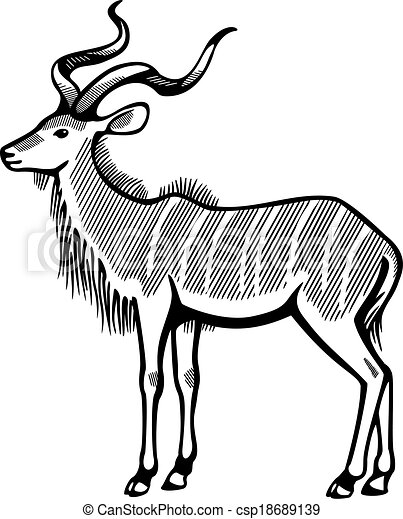 vector line drawing of greater kudu antelope standing side rh canstockphoto com