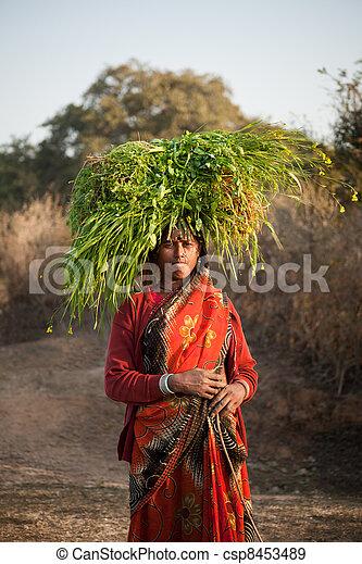 gree, falusi, szállítás, indiai, nő - csp8453489