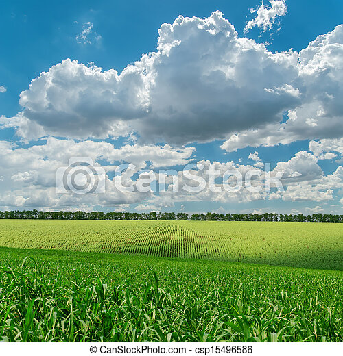 green agriculture field under cloudy sky - csp15496586