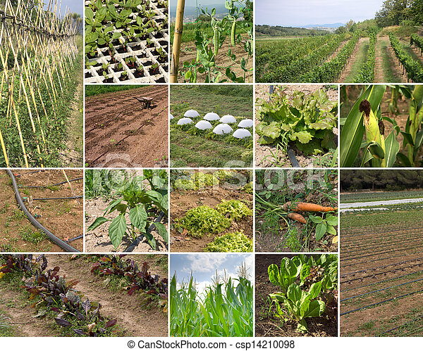 Green Agriculture - csp14210098