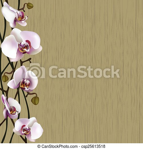 Green background with white orchid flowers, stems and buds - csp25613518