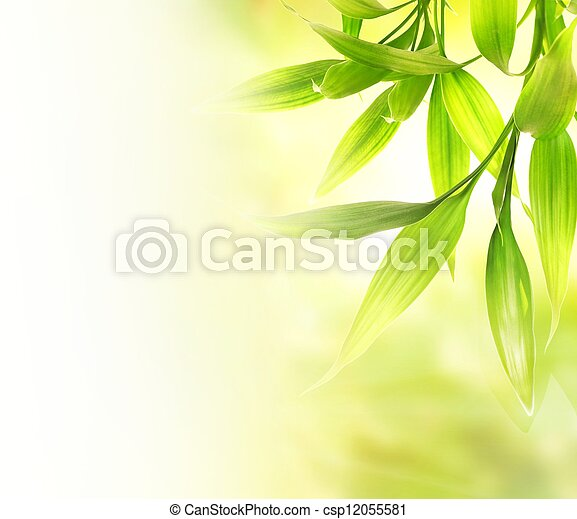 Green bamboo leaves over abstract blurred background - csp12055581