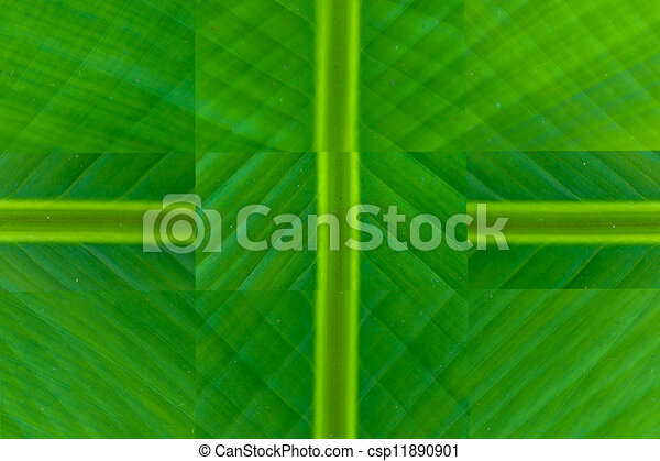 Green Banana Leaf Stock Illustration