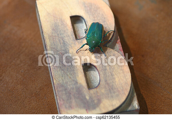 Green beetle on wood letter B - csp62135455