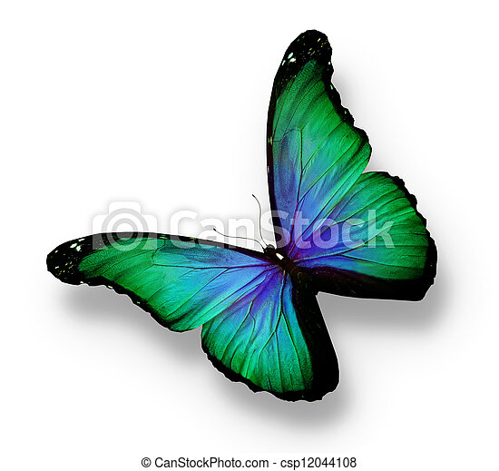 Green, blue butterfly, isolated on white - csp12044108