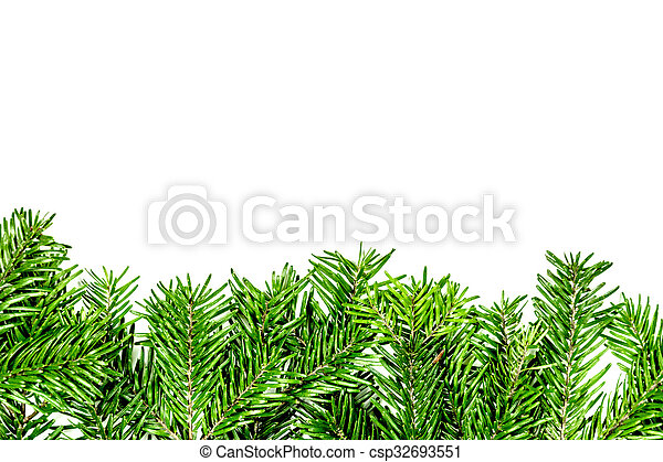 green branch of christmas tree on the white background - csp32693551