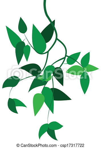 Green branch with leaves - csp17317722