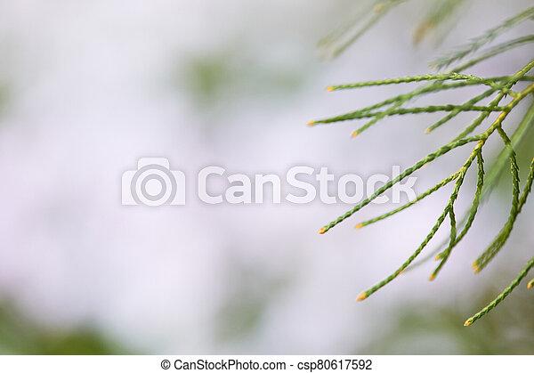 green branches on the blur garden background. - csp80617592