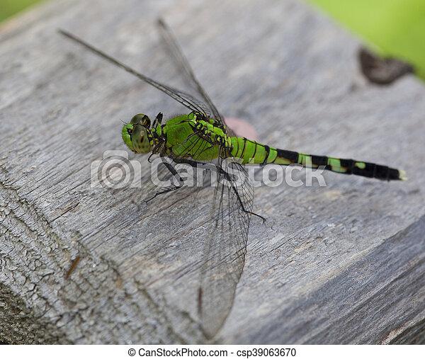Green bug - csp39063670