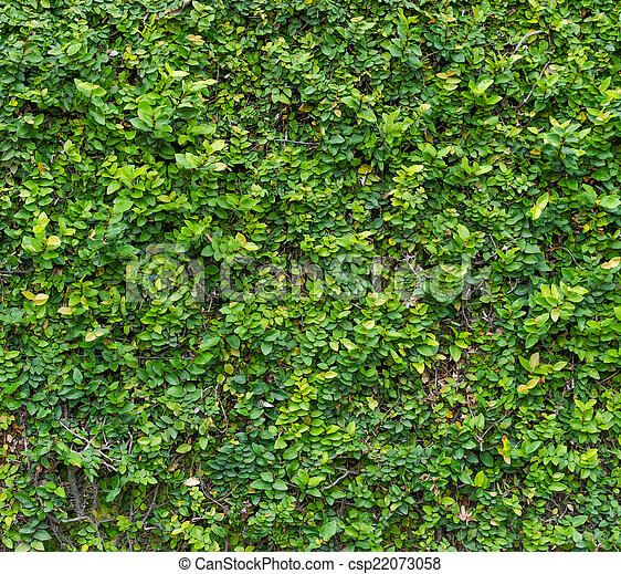 Green bush. seamless tileable texture