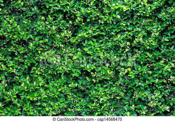 Green Bush Texture In The Garden   Csp14568470