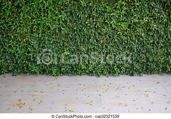 Green bush wall of leaves in garden, background texture wallpaper image