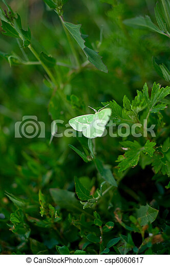 green butterfly - csp6060617