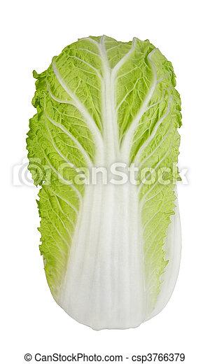 Green Cabbage XXL - csp3766379
