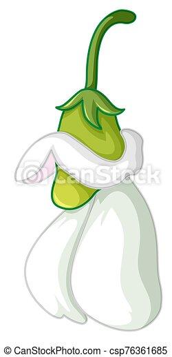 Green chili on white background - csp76361685