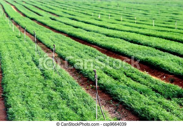 Green Crops in a Field - csp9664039