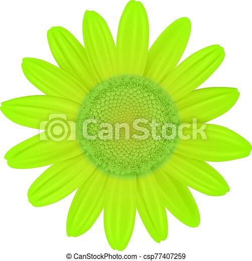 Green Daisy flower - csp77407259