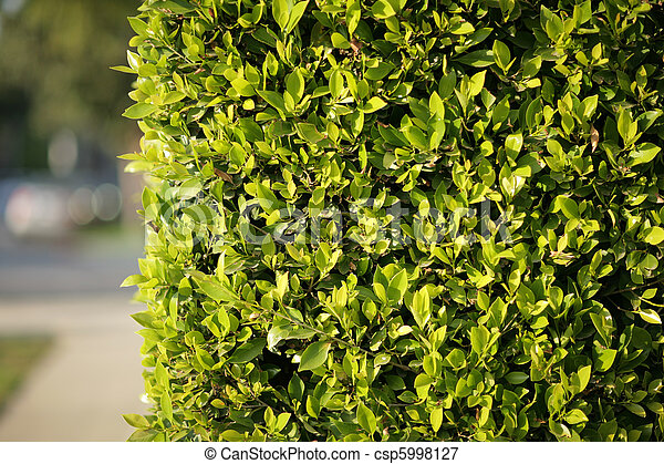 Green fence background - csp5998127