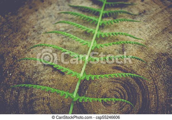 Green fern leaf on the tree stump - csp55246606