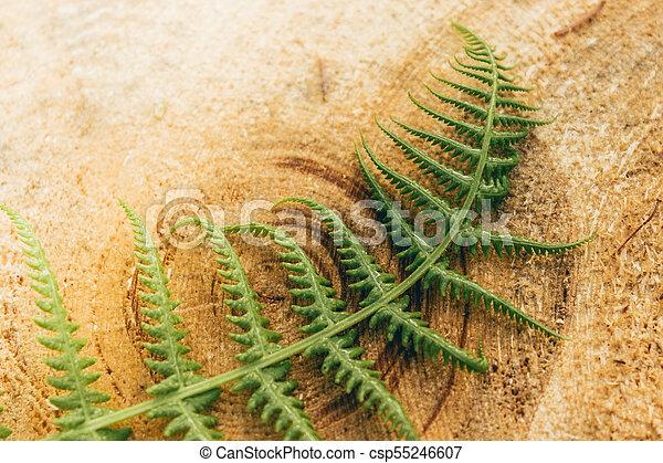Green fern leaf on the tree stump - csp55246607
