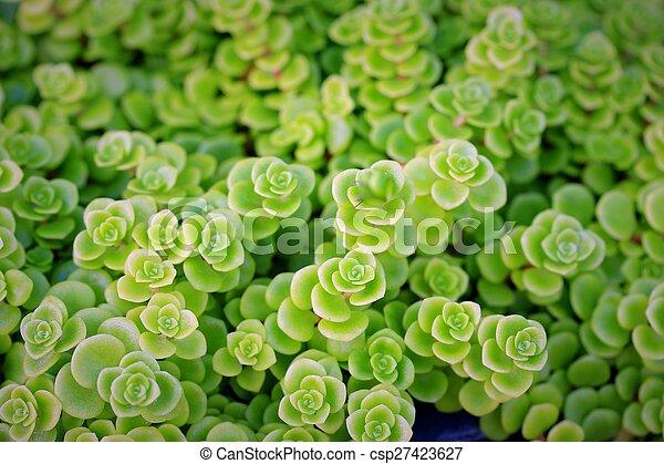 green fern - csp27423627