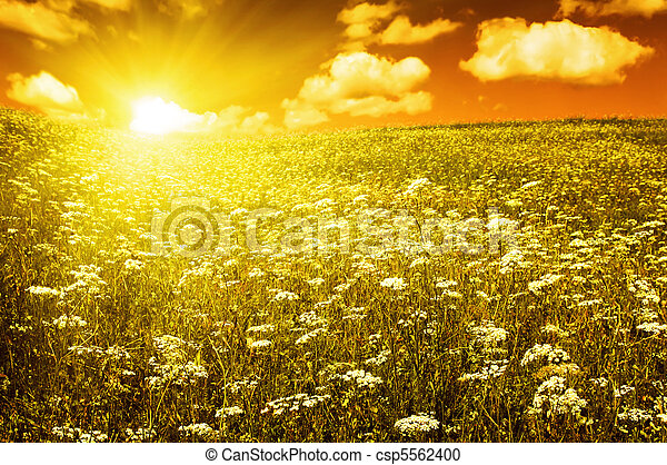 green field with blooming flowers and red sky - csp5562400