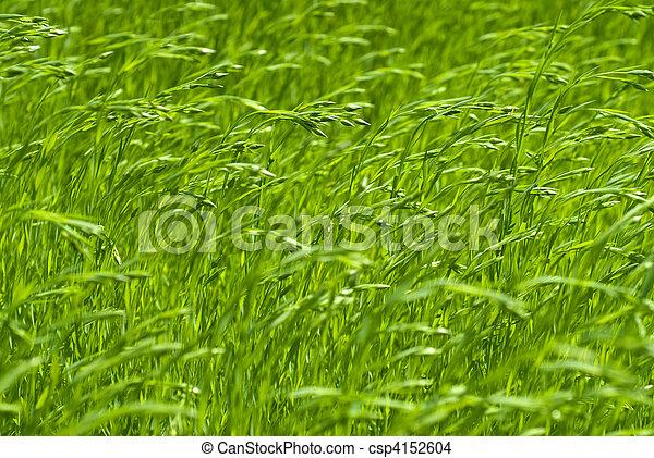 green flax - csp4152604