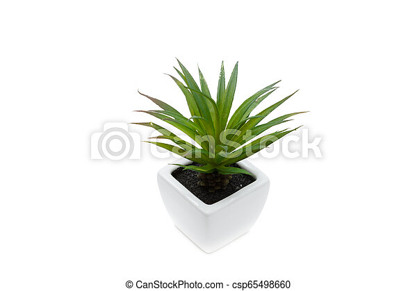 green flower in a pot, isolated on white - csp65498660