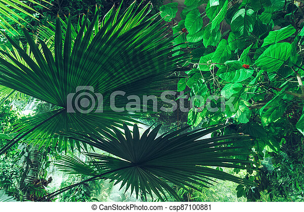 green foliage background with fan palm leaves - csp87100881