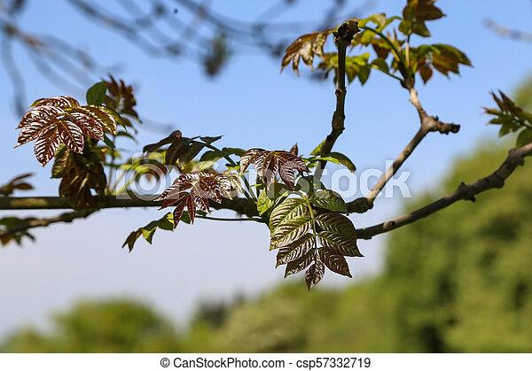 Green foliage in the sun - csp57332719