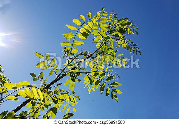 Green foliage in the sun - csp56991580