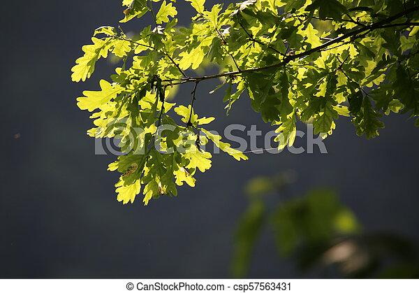 Green foliage in the sun - csp57563431
