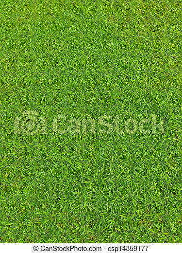 Green football field grass - csp14859177