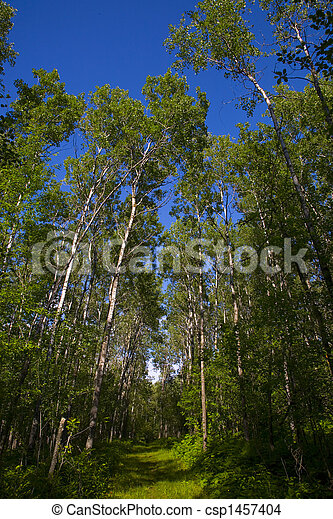 Green Forest and Blue Sky - csp1457404